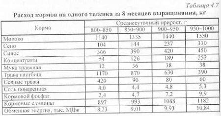 рассчётно-кассовое обслуживание таблица привесов бычков на откорме породы голштино фризские препарат
